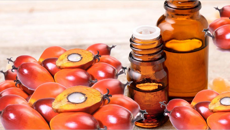 PALM KERNEL OIL: THE HEALTH BENEFITS OF THIS ORGANIC PRODUCT ARE PRICELESS