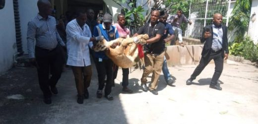 LAGOS EVACUATES LION HABOURED BY INDIAN IN VICTORIA ISLAND